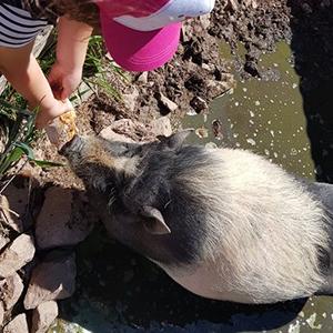 Une Ferme à la Bassette - Anniversaire à la ferme - Les cochons nains 2 - Site