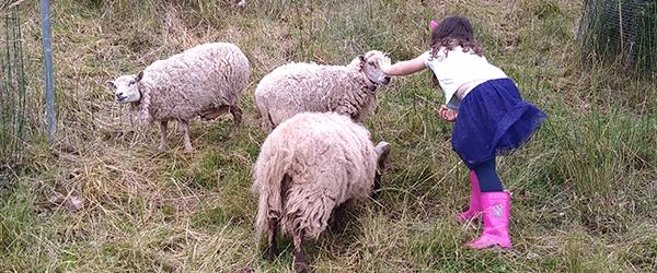 Une-Ferme-a-la-Bassette-Moutons-dOuessant-Anniversaire-a-la-ferme
