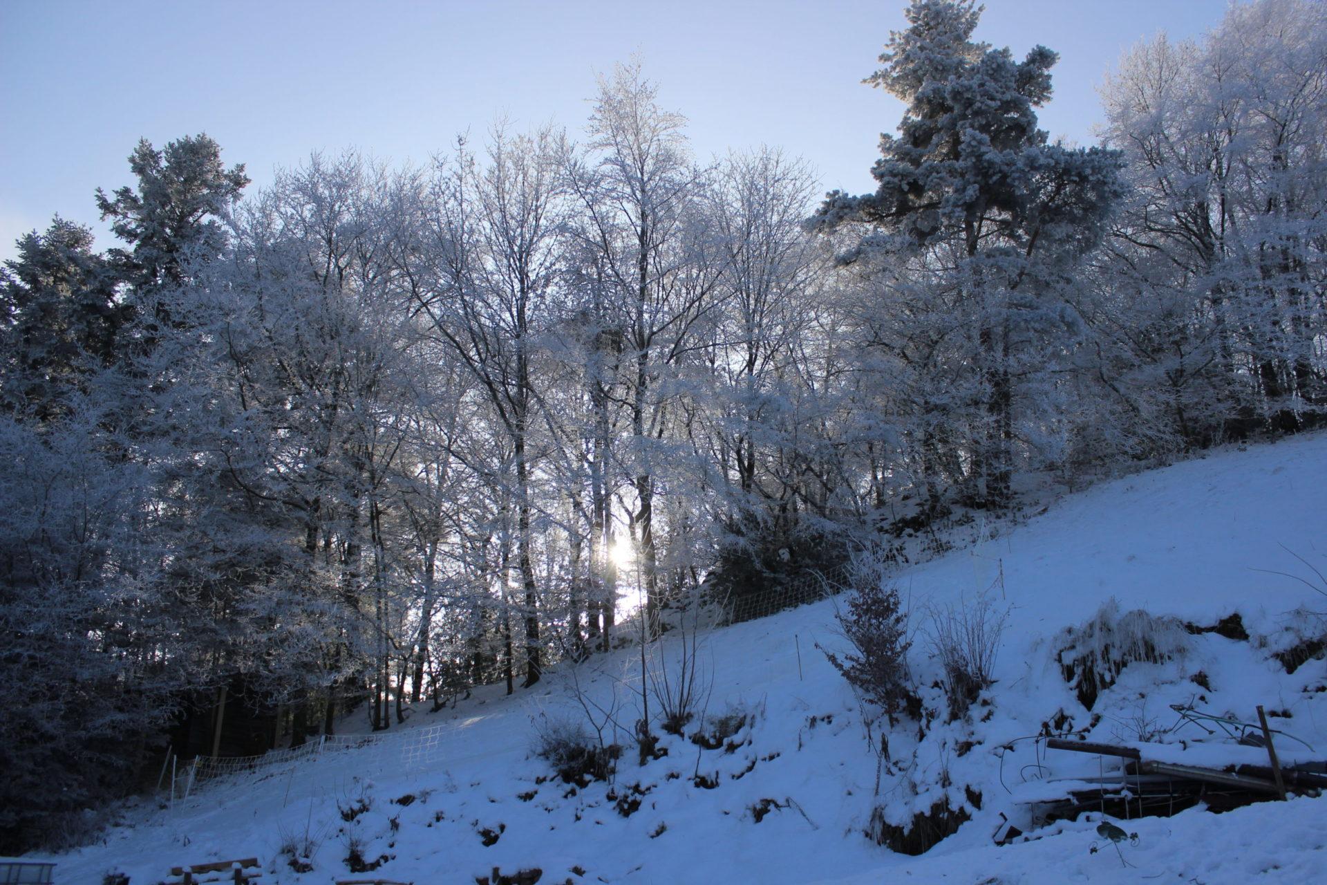 hiver-une-ferme-a-la-bassette